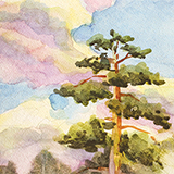water-colour of pine trees and clouds in the sky